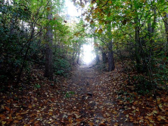 Eén van de steile afdalingen bij de Duinentrail