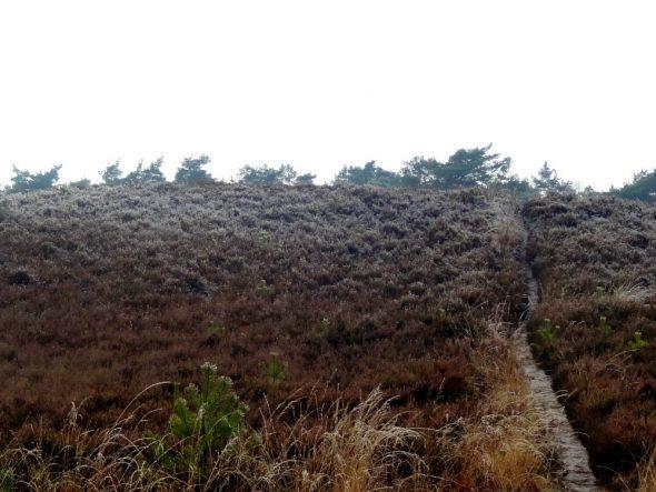 De Woldbergheide in een winterse setting