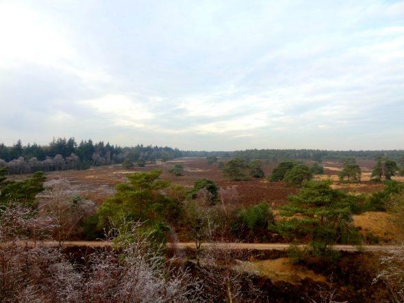 Uitzicht vanaf de uitkijktoren bij de Haelberg