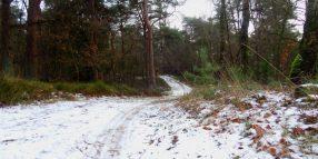 Winterse trailpaadjes op de heide bij de Dellen
