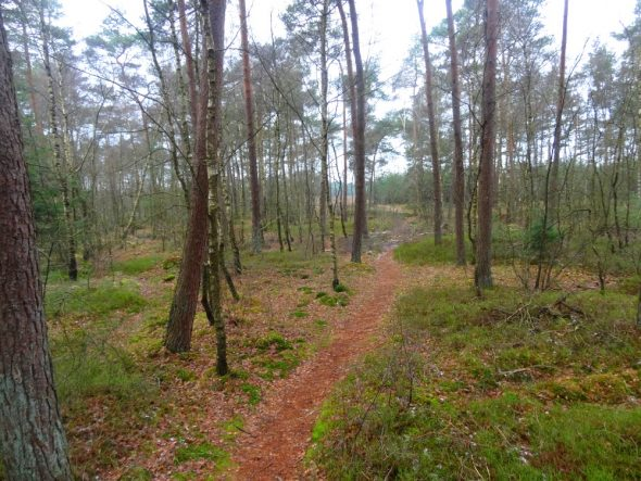 Rennen over verlaten trails bij de Wezeperheide