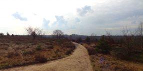 Sallandtrail - De Sallandse Heuvelrug